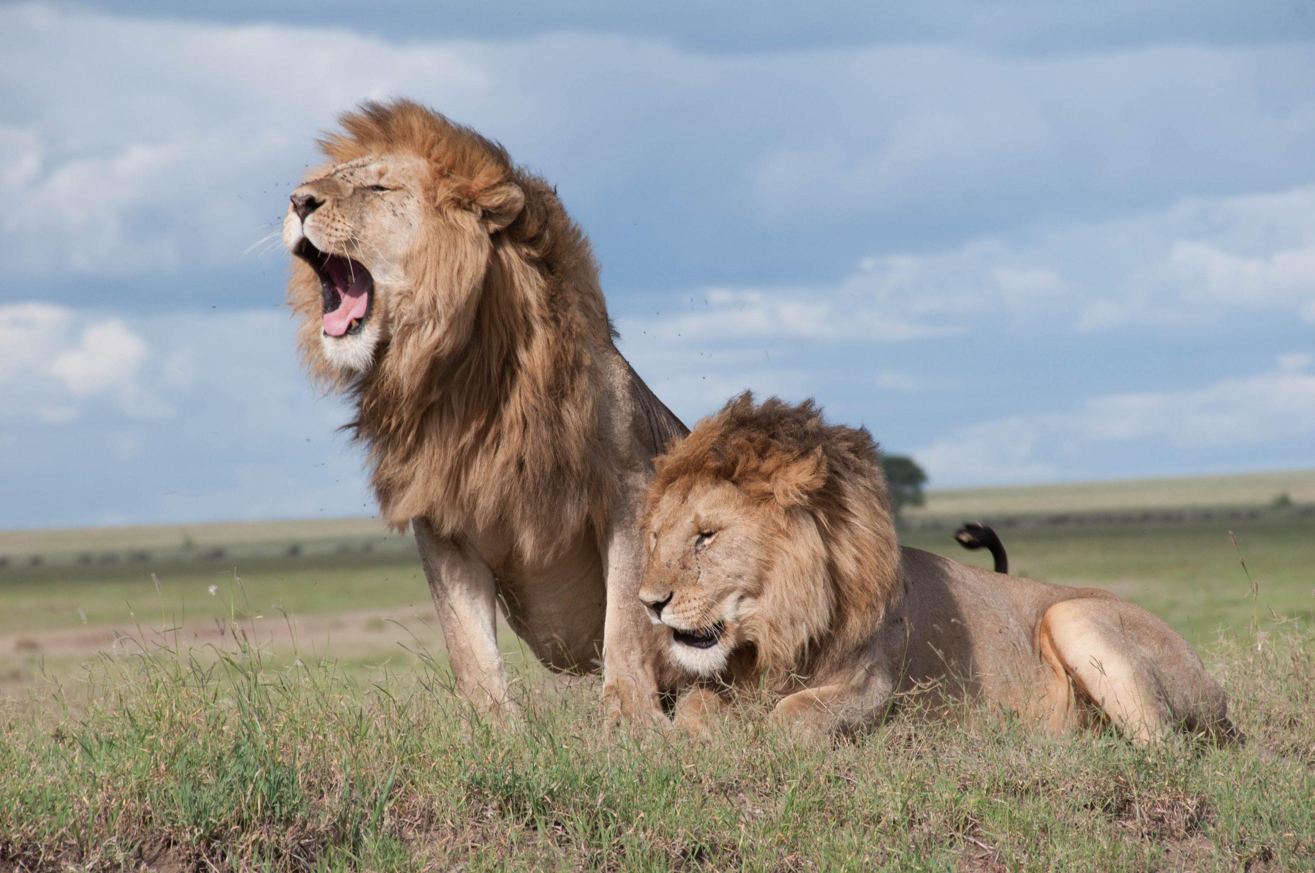 Los 10 Animales más PELIGROSOS del Mundo