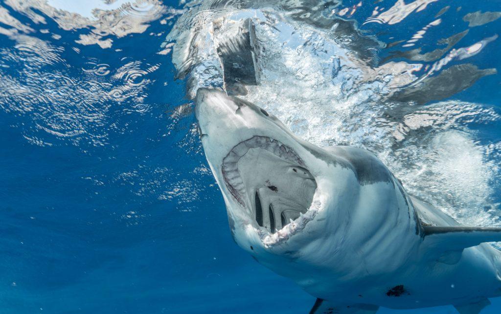 Estos son los animales más peligrosos del mundo
