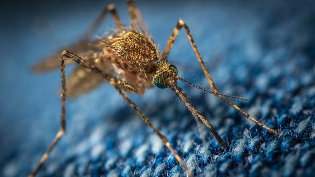 Diferentes tipos de mosquitos que hay hoy en día